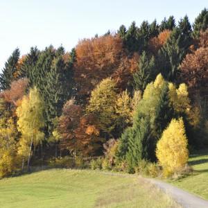 Herbststimmung (6).JPG
